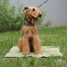 Охлаждающий коврик для собак OSSO Fashion р-р 50*70 см