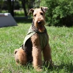 Охлаждающая попона для собак OSSO Fashion, 40 р-р