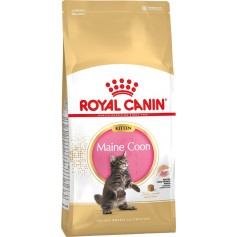 Royal Canin Maine Coon Kitten, 10 кг.